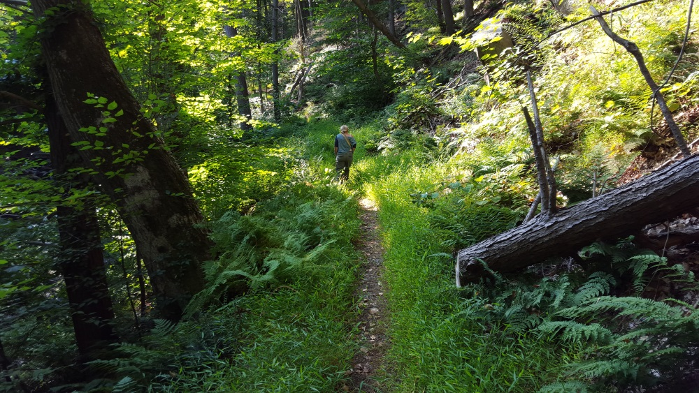 north redoubt trail starts to rise