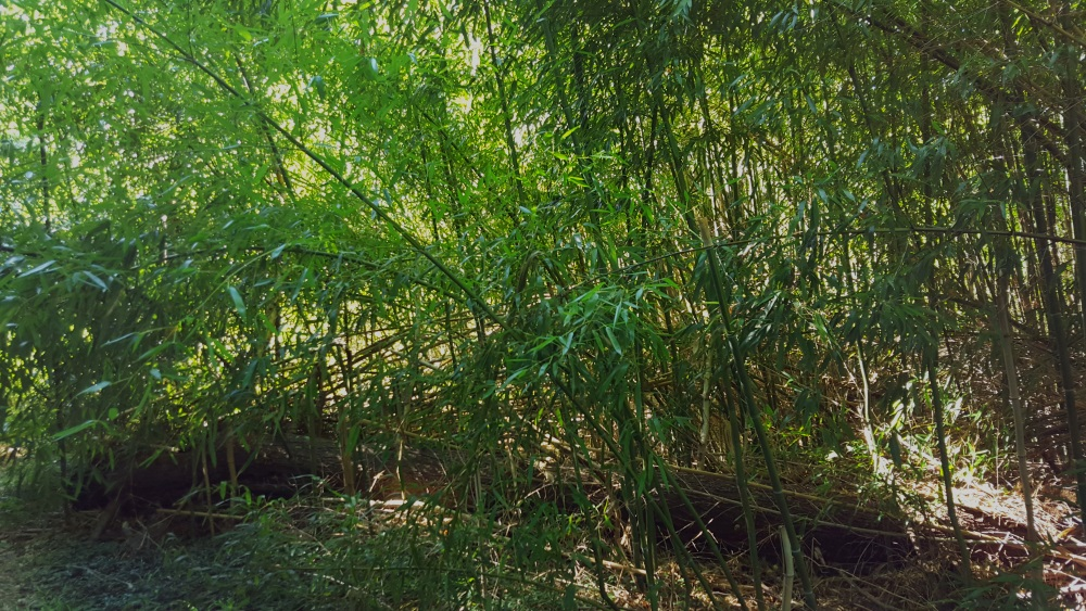 10 Thick Bamboo
