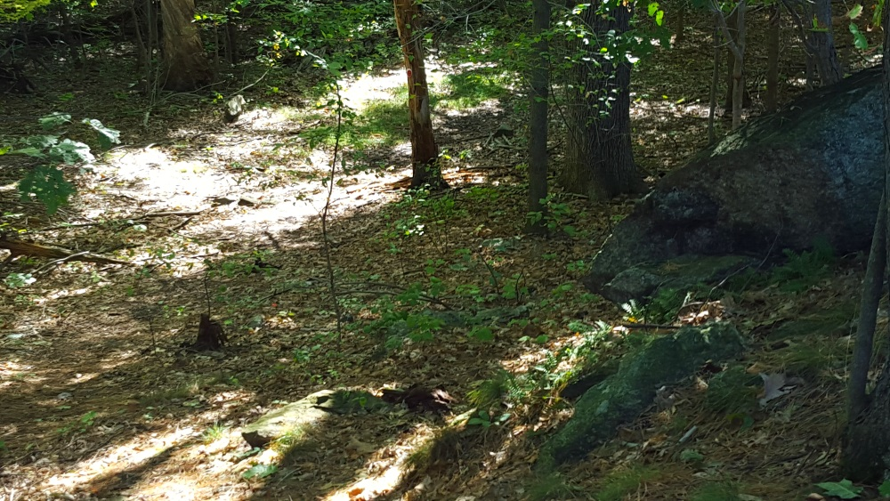6 Ravines cut by glaciers so long ago, dappled light