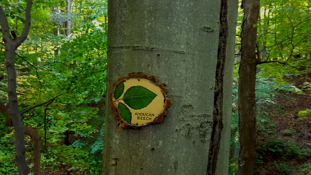 Boscobel Woodland Beautiful tree with marker