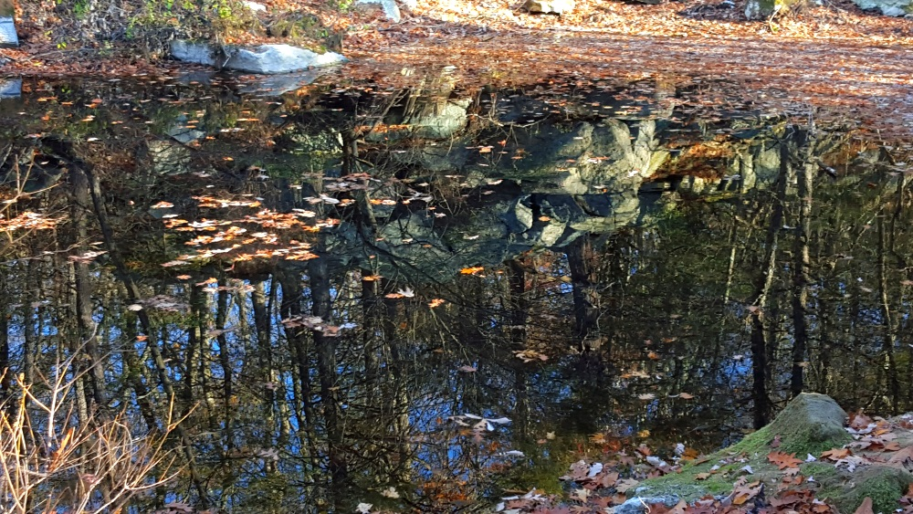 Manitoga Lost Pond Reflections