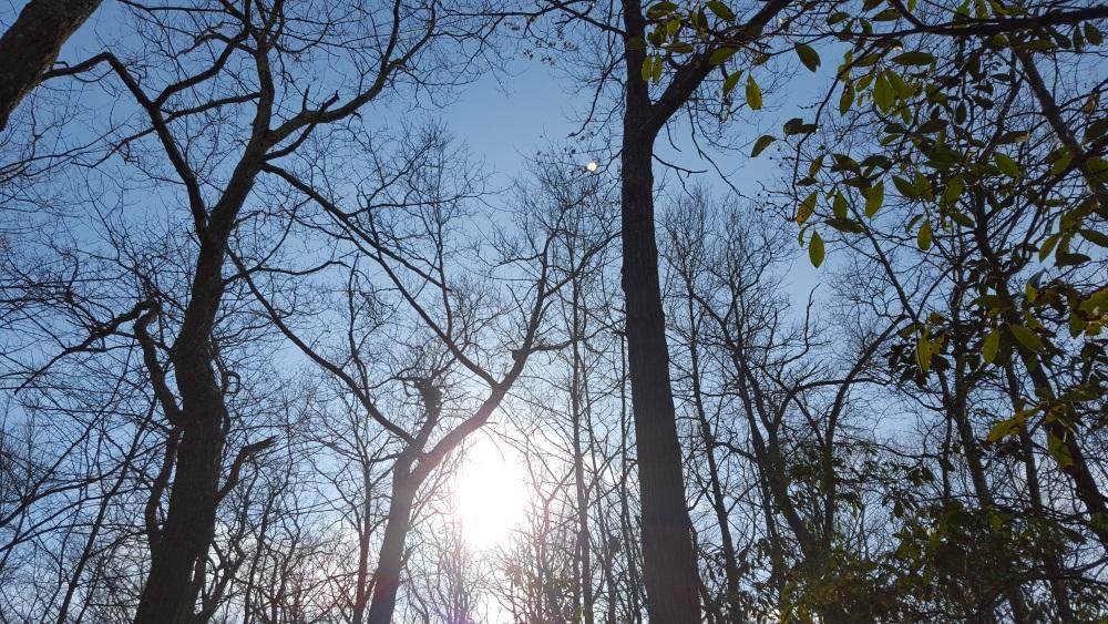 Charcoal Burner bright sky