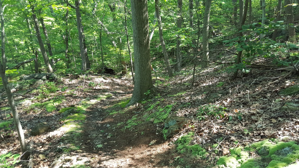 Garrison Prayer Trail Starts Trail Winds Up and Down