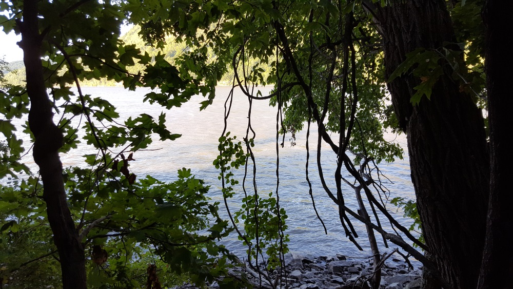 little-stony-pont-beach-cold-spring-view-through-trees