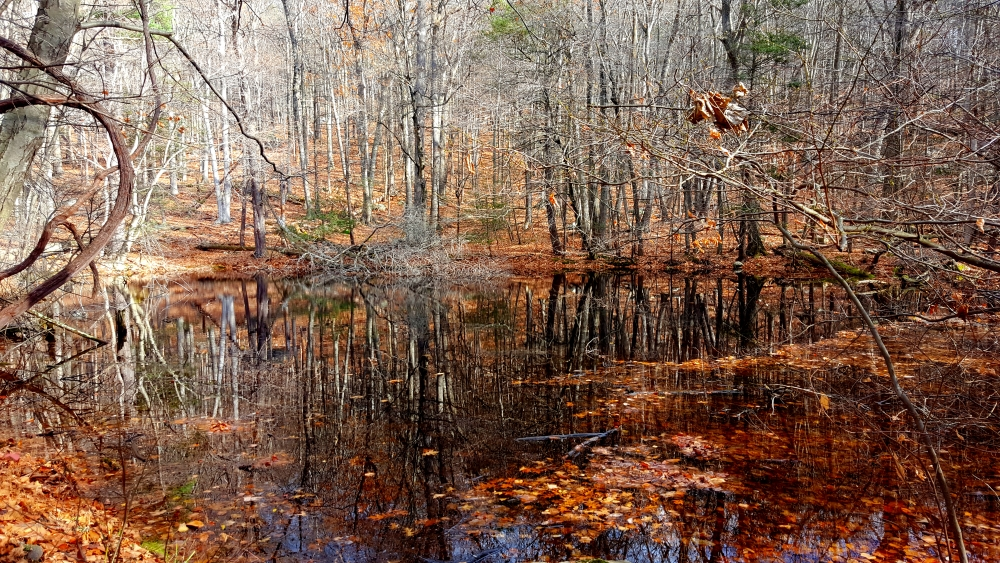 sugarloaf-hill-philipstown-reflection-pond